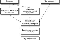 Схема развития бронхиальной астмы