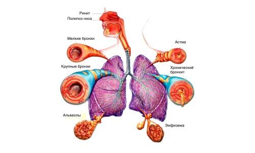 Дыхательные пути в норме и при патологии